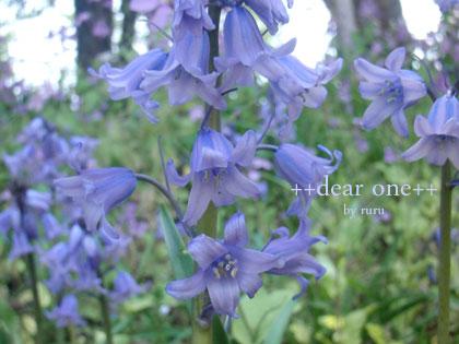 春の色集め140427_13