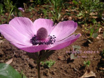 春の色集め140427_14
