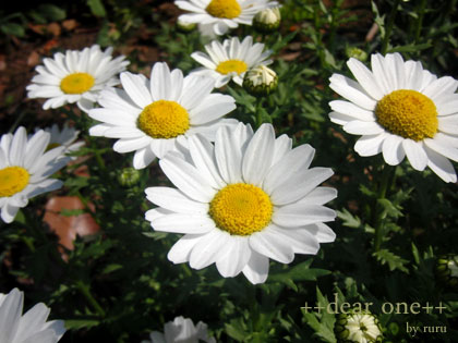 春の色集め140429_9