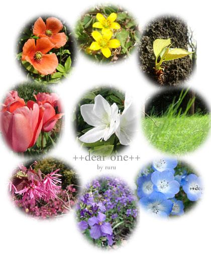 春の色140430_1