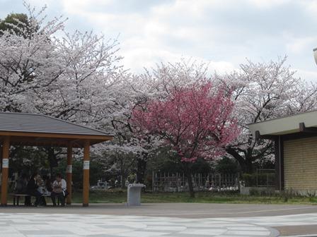 01402花見_03