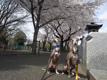 01402花見_04