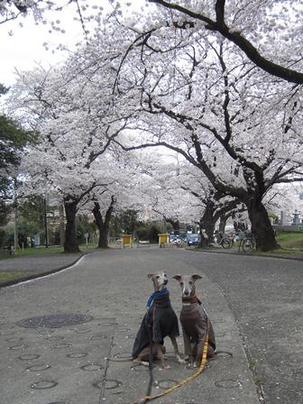 01402花見_02