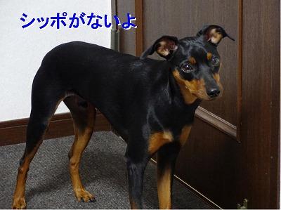 s-雷2014072310
