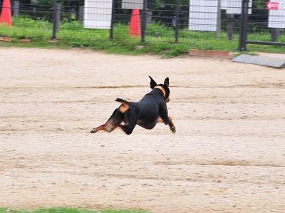 s-飛行犬20140701