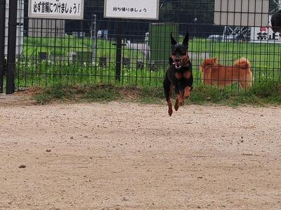 s-飛行犬20140702