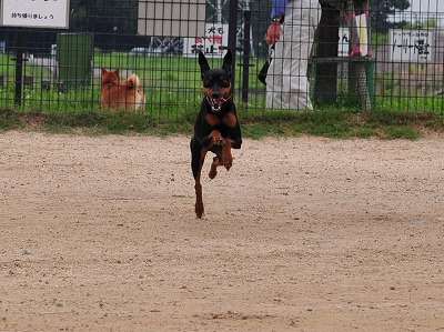 s-飛行犬20140703
