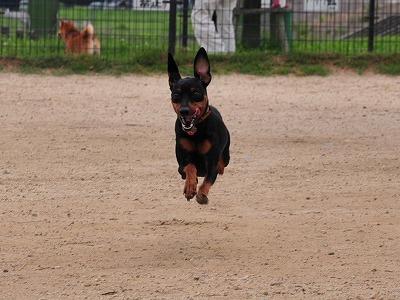 s-飛行犬20140705