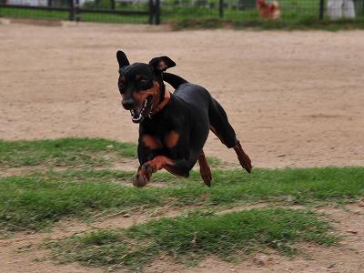 s-飛行犬20140706