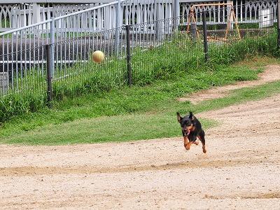 s-飛行犬20140709