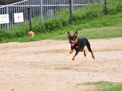 s-飛行犬20140710