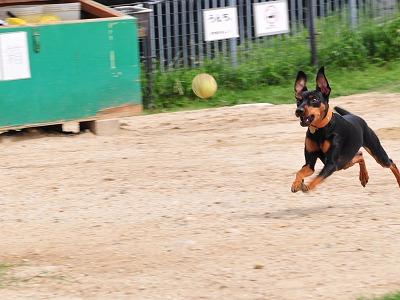 s-飛行犬20140711