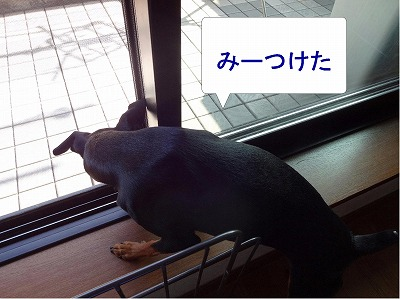 s-亀まろ20140710