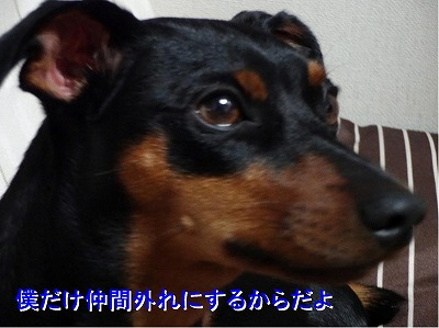 s-dc0806142 コピー1
