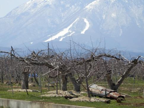 リンゴの町の・・・スキー場
