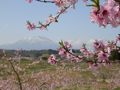丹霞郷・・・桃の花