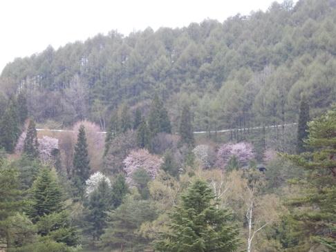 今朝の高原