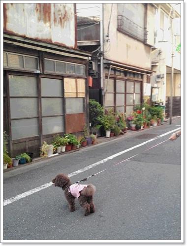 musasikoyama1.jpg