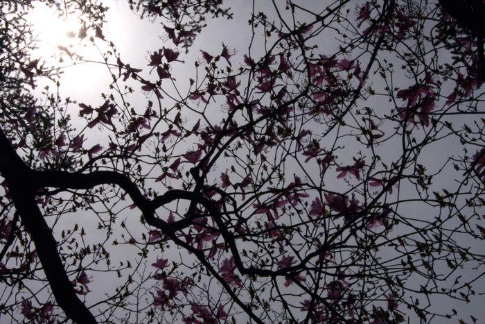 枝と花の影と光と3