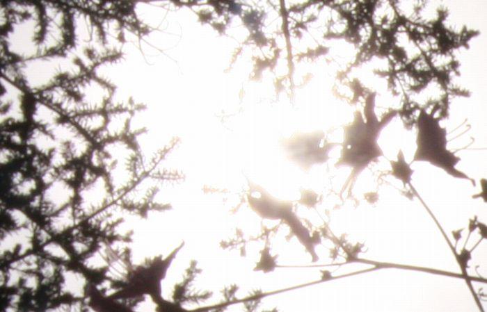 枝と花の影と光と2