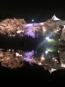 反射する幻想桜