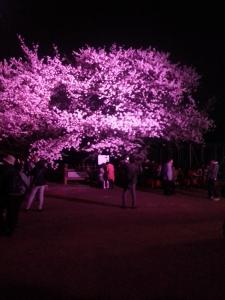 桜やで!1