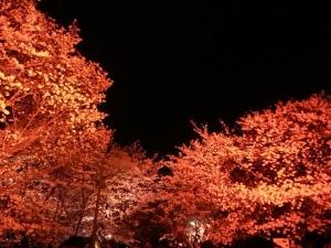 夜桜やで3