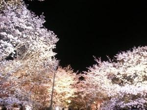 夜桜やで4