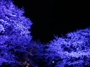 夜桜やで5