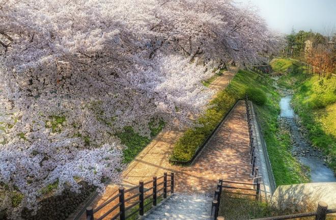 hdr20140408sakura.jpg