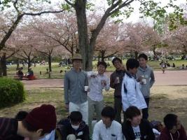 hanami_2.jpg