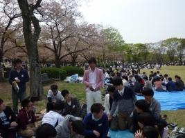 hanami_3.jpg