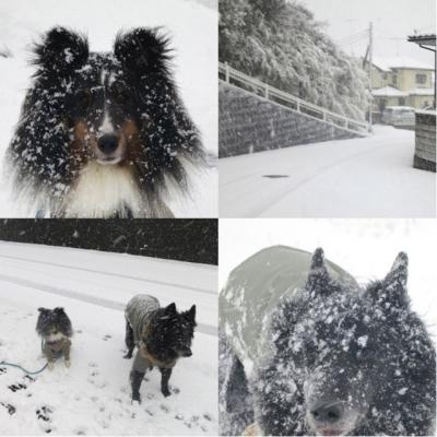 記録的大雪10140208