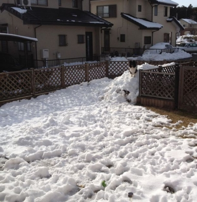 記録的大雪201402102