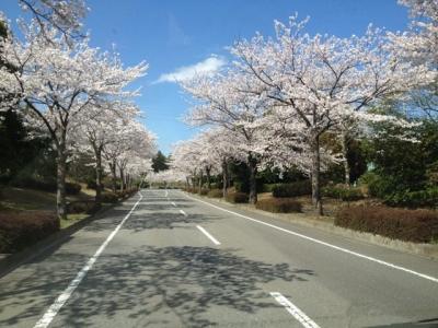 桜2014その5