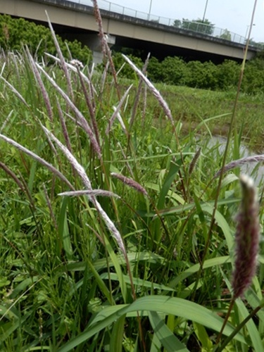 2014.5.24 春の草刈 004 (1)