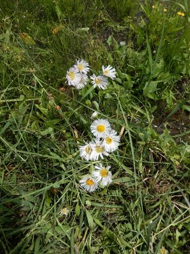 2014.5.24 春の草刈 004