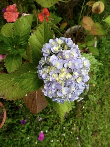 2014.6.24 自宅の花と野菜 101