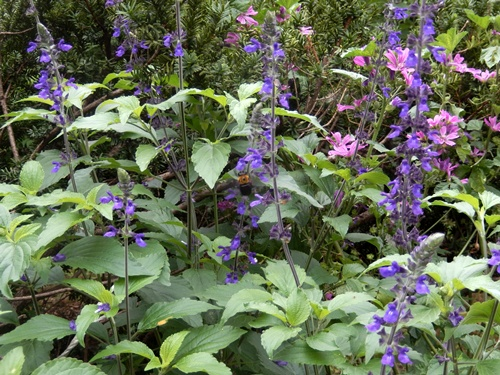 2014.6.24 自宅の花と野菜 115