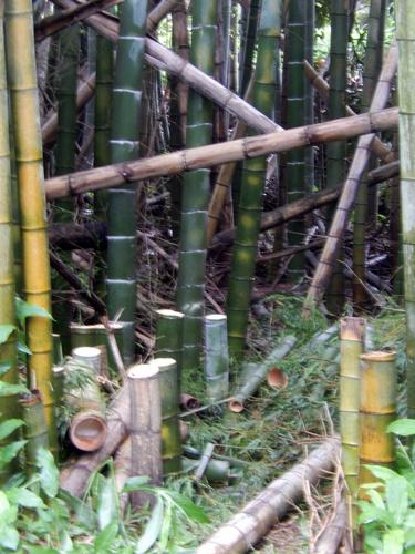 2014.6.26 切り始めた竹 045