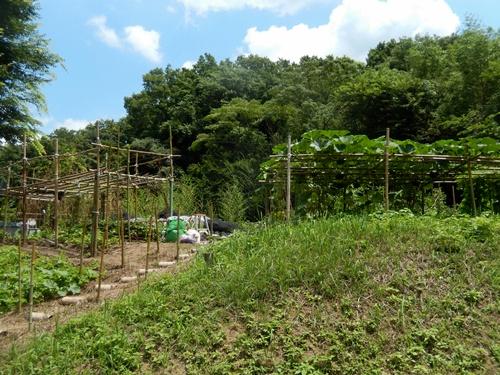 2014.7.2南清苑近くの畑 017