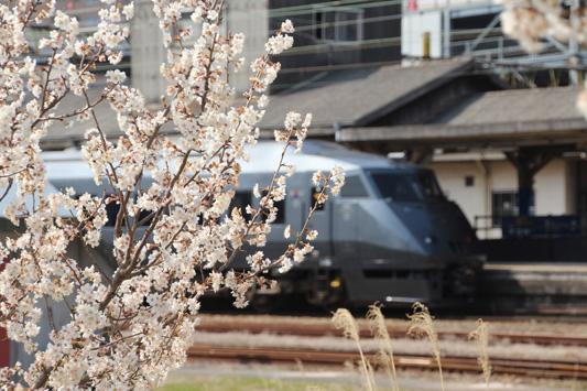 140308鳥栖桜 (120)のコピー