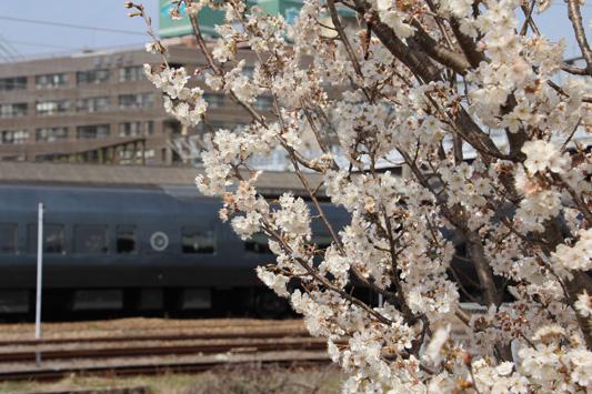 140308鳥栖桜 (117)のコピー