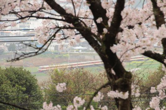 140329桜・電車 (53)のコピー