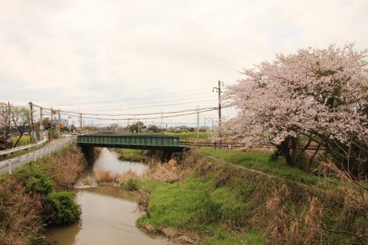 140330桜 (71)のコピー