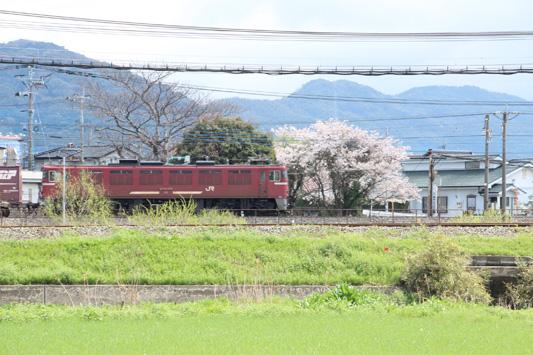 140330桜1063レ (87)のコピー