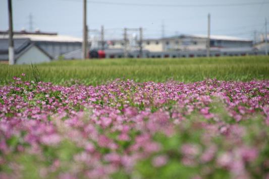 140503菜の花 (125)のコピー
