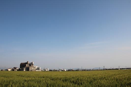 140504瀬高麦畑 (12)のコピー