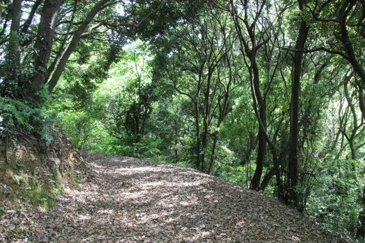 140506朝日山公園 (160)のコピー