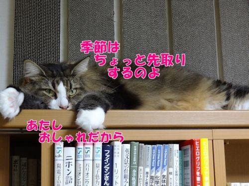 akibed4_text.jpg